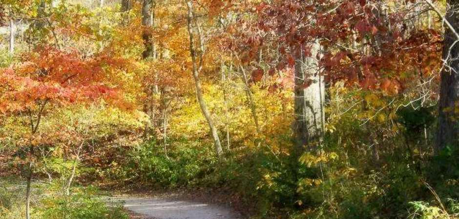 Fall Foliage In The Ozarks - 63 Wooded Acre Resort Eureka Springs Arkansas